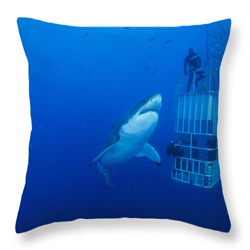 Carcharodon Carcharias Throw Pillow featuring the photograph Male Great White With Cage, Guadalupe by Todd Winner