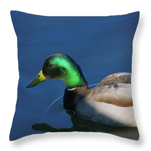 Male Mallard Just Handing Out On The Lake Throw Pillow featuring the photograph Male Mallard by Tony Umana