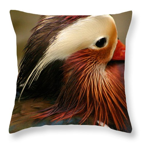 Mandarin Duck Throw Pillow featuring the photograph Male Mandarin Duck China by Ralph A Ledergerber-Photography