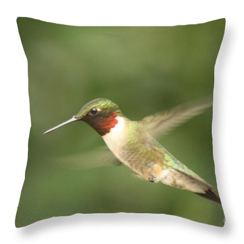 Male Throw Pillow featuring the photograph Male Ruby Throated Hummingbird by Cathy Beharriell