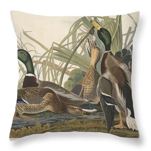 Throw Pillow featuring the drawing Mallard Duck by Robert Havell After John James Audubon