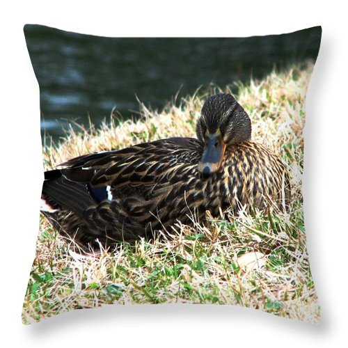 Duck Throw Pillow featuring the photograph Mallard Female 1 by J M Farris Photography