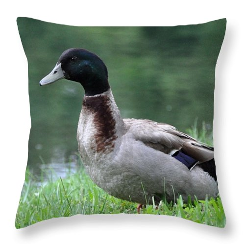 Duck Throw Pillow featuring the photograph Mallard by John Black