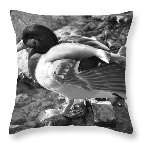 Duck Throw Pillow featuring the photograph Mallard by Lauri Novak