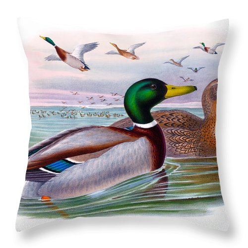 Mallard Throw Pillow featuring the painting Mallard Or Wild Duck Antique Bird Print Joseph Wolf Birds Of Great Britain by Orchard Arts