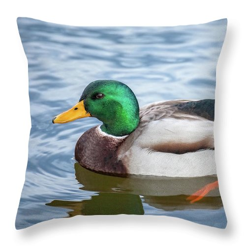 Animals Throw Pillow featuring the photograph Mallard Swimming by Leslie Banks