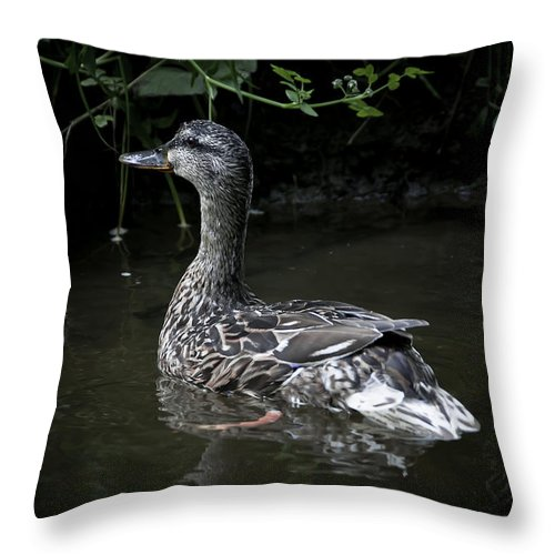 Duck Throw Pillow featuring the photograph Mama Duck by Svetlana Sewell