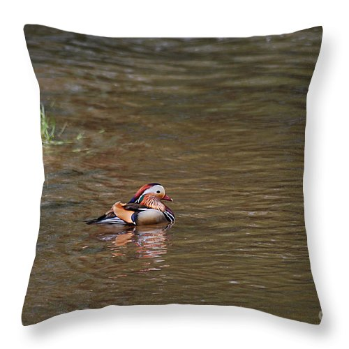 Mandarin Throw Pillow featuring the photograph Mandarin Duck 20130508_314 by Tina Hopkins