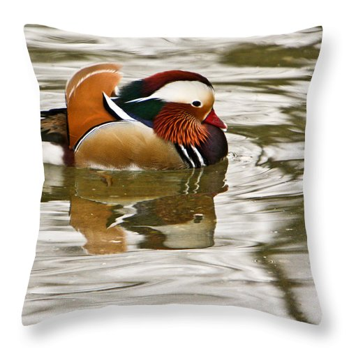 Mandrin Duck Strutting Throw Pillow featuring the photograph Mandrin Duck Strutting by Douglas Barnett