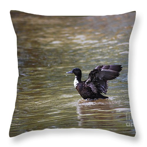 Manky Throw Pillow featuring the photograph Manky Mallard 20130508_336 by Tina Hopkins