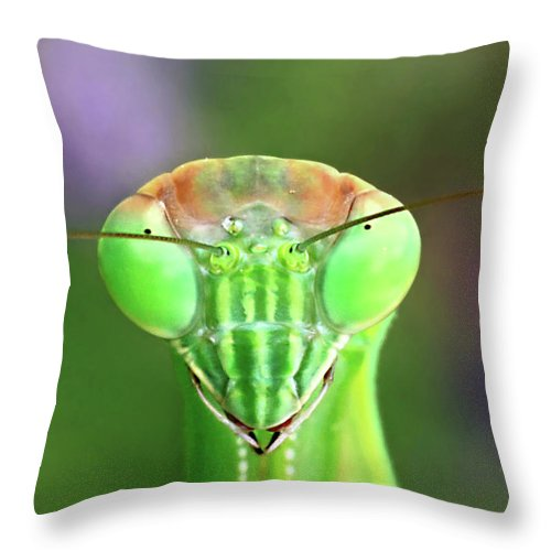 Praying Mantis Throw Pillow featuring the photograph Mantis Stare-down by Carolyn Derstine
