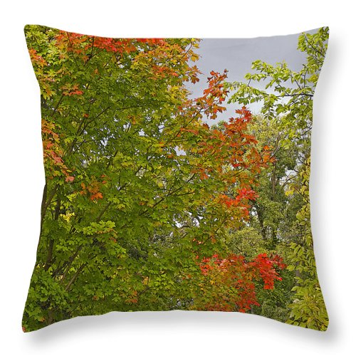Autumn Throw Pillow featuring the photograph Maple Aflame by Ann Horn
