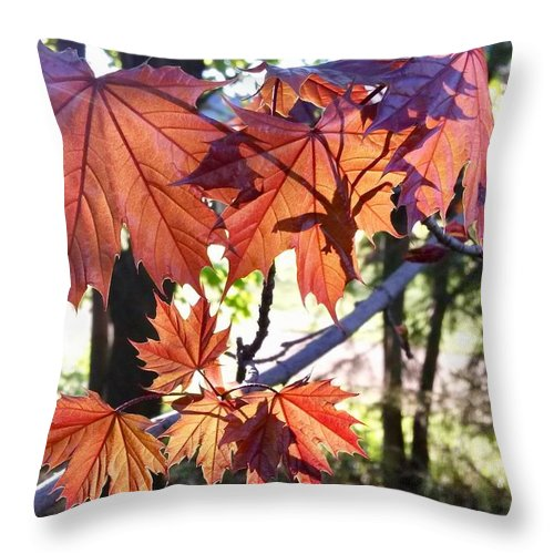Maple Tree Throw Pillow featuring the photograph Maple by Aurora Bautista