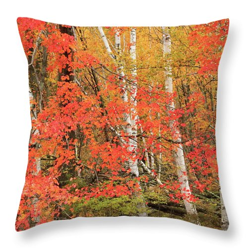 Forest Throw Pillow featuring the photograph Maple Birch Forest In Autumn by John Burk