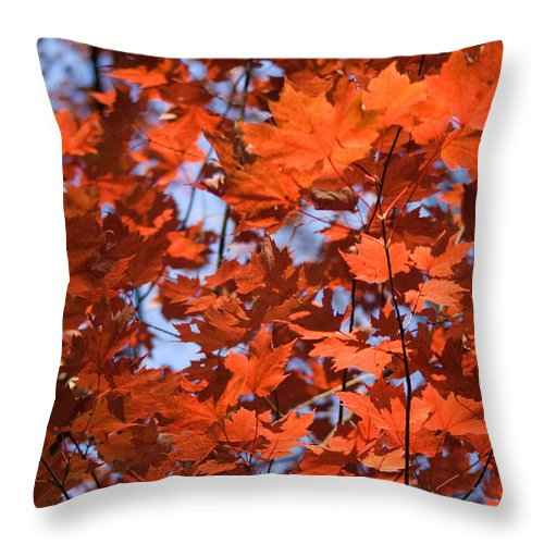 Maple Throw Pillow featuring the photograph Maple Leaves Aglow by Douglas Barnett