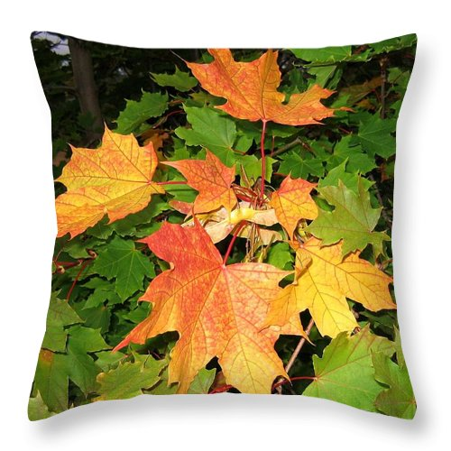 Maple Leaves Throw Pillow featuring the photograph Maple Mania 10 by Will Borden