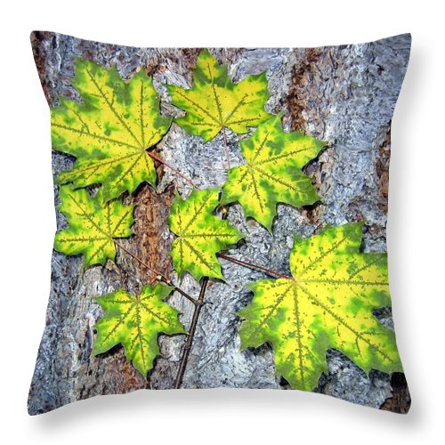 Autumn Throw Pillow featuring the photograph Maple Mania 12 by Will Borden