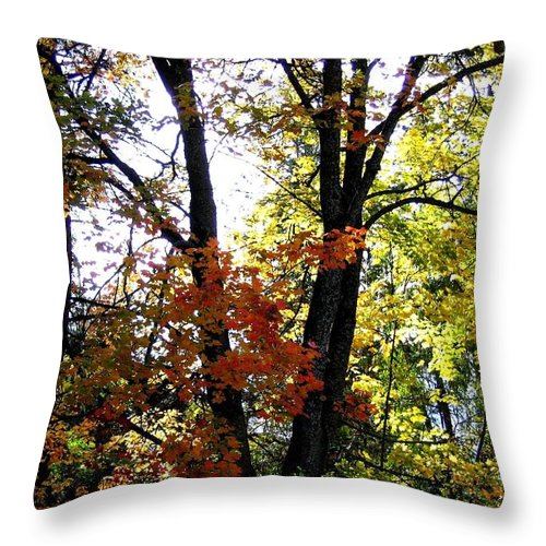 Autumn Throw Pillow featuring the photograph Maple Mania 16 by Will Borden