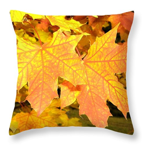 Autumn Throw Pillow featuring the photograph Maple Mania 2 by Will Borden