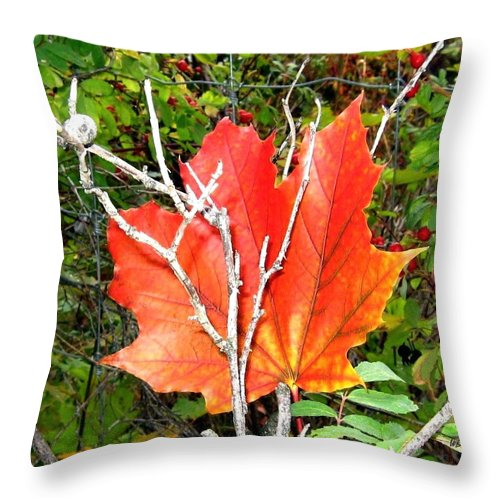 Autumn Throw Pillow featuring the photograph Maple Mania 6 by Will Borden