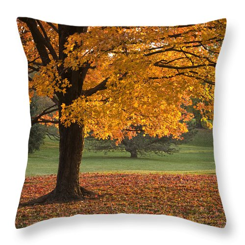 Maple Trees Throw Pillow featuring the photograph Maples Trees In Fall by Chad Davis