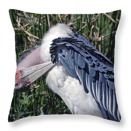Bird Throw Pillow featuring the photograph Marabou Stork by Donna Proctor