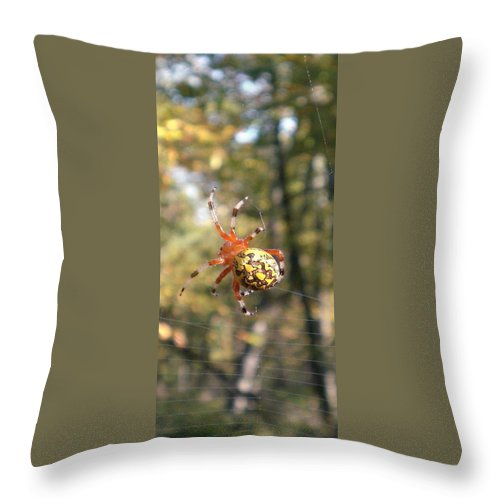 Virginia Marbled Orb Weaver Images Marbled Orb Weaver Photo Prints Red Black And Yellow Spider Images Orb Weaver Pictures Spider Diversity Food Web Forest Ecosystem Nature Biodiversity Arachnid Images Throw Pillow featuring the photograph Marbled Orb Weaver by Joshua Bales