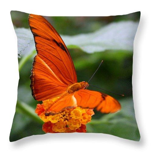 Bug Throw Pillow featuring the photograph Marmalade Delight by David Dunham