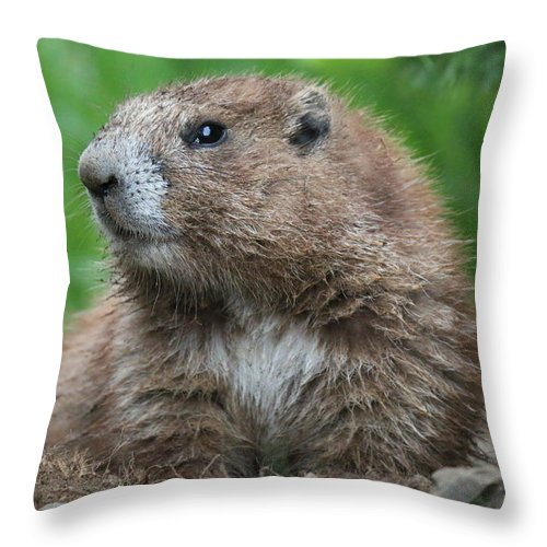 Nature Throw Pillow featuring the photograph Marmot by Lisa Spero