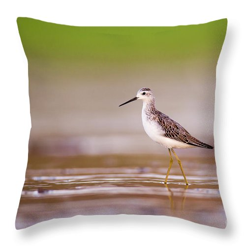Marsh Sandpiper Throw Pillow featuring the photograph Marsh Sandpiper Tringa Stagnatilis by Alon Meir