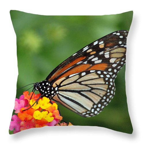 Monarch Throw Pillow featuring the photograph Marvelous Monarch by Suzanne Gaff