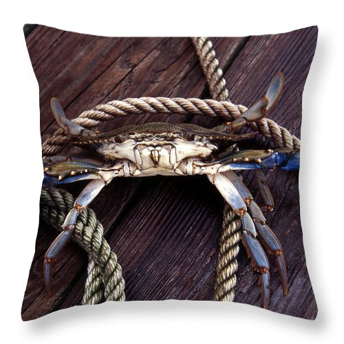 Nature Throw Pillow featuring the photograph Maryland Blue Crab by Skip Willits