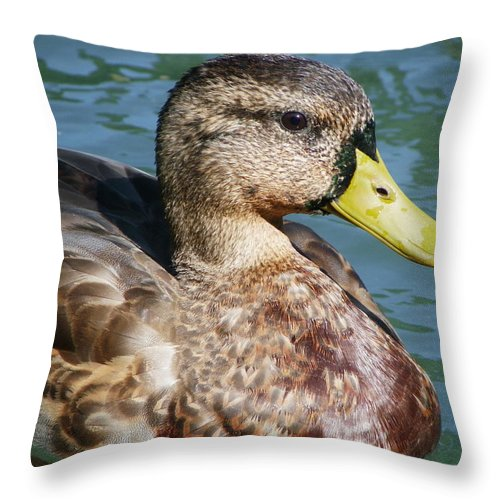 Birds Throw Pillow featuring the photograph Master Mallard by Peggy King