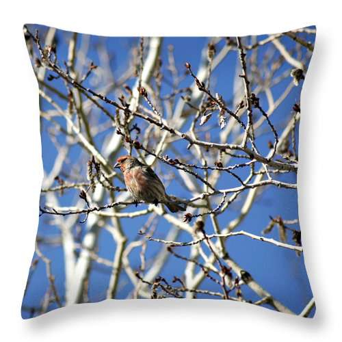 Bird Throw Pillow featuring the photograph Mate In Waiting by Marilyn Hunt
