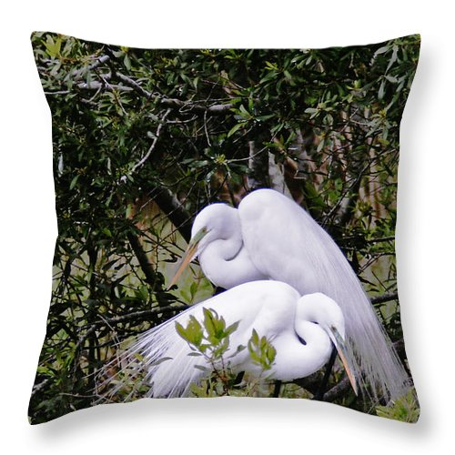 Bird Throw Pillow featuring the photograph Mating Season by Phill Doherty