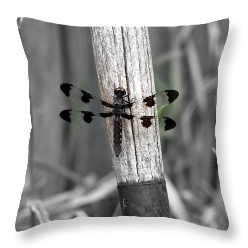 Dragonfly Throw Pillow featuring the photograph Maturity by Elizabeth Hart