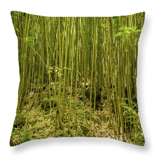 Climate Throw Pillow featuring the photograph Maui's Thick Bamboo by Cory Huchkowski