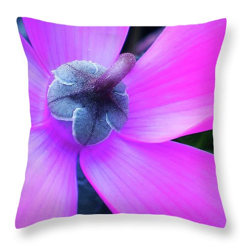 Mauve Cyclamen Throw Pillow featuring the photograph Mauve Cyclamen by Kaye Menner