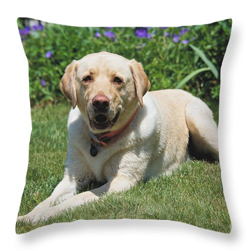 Dog Throw Pillow featuring the photograph Max by Cathy Fitzgerald