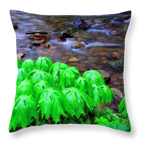 Mayapple Throw Pillow featuring the photograph Mayapples And Middle Fork by Thomas R Fletcher