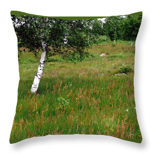 Landscape Throw Pillow featuring the photograph Meadow With Birch Trees by Valerie Ornstein