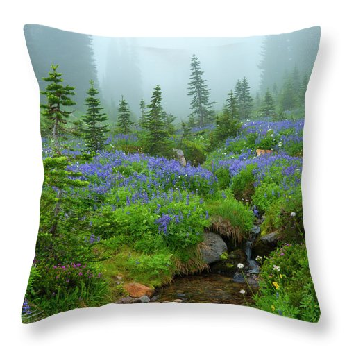 Stream Throw Pillow featuring the photograph Meadows In The Mist by Mike Dawson
