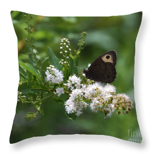 Butterfly Throw Pillow featuring the photograph Meadowsweet Wood Nymph by Randy Bodkins