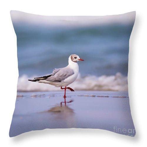 Black Headed Throw Pillow featuring the photograph Mediterranean Gull Ichthyaetus Melanocephalus by Alon Meir