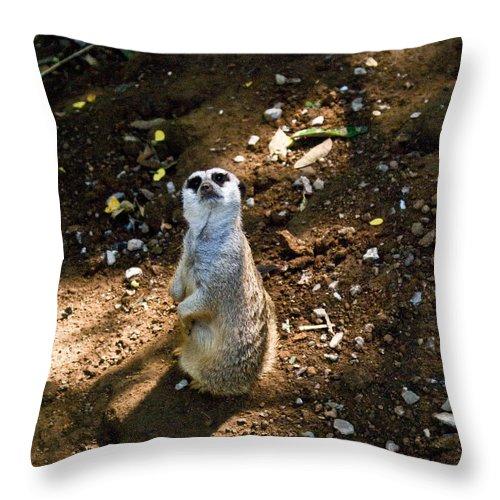 Meerkat Throw Pillow featuring the photograph Meerkat   Say What by Douglas Barnett