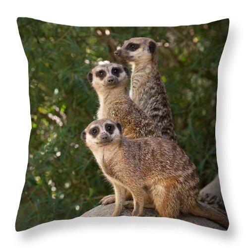 Meerkat Throw Pillow featuring the photograph Meerkat Hill by Chad Davis
