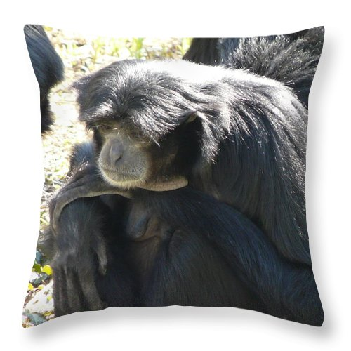 Animal Throw Pillow featuring the photograph Melancholy by Valerie Ornstein