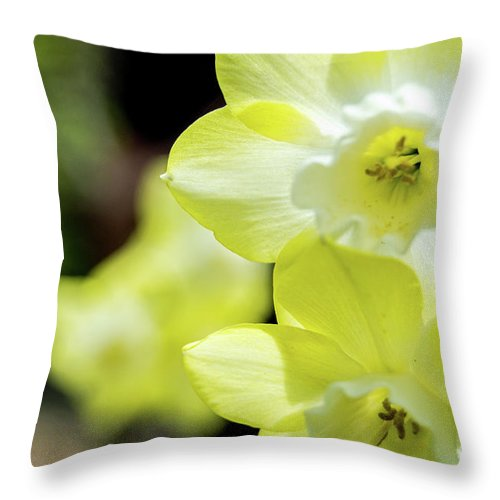 Yellow Flowers Throw Pillow featuring the photograph Mello Yellow by Edmund Mazzola