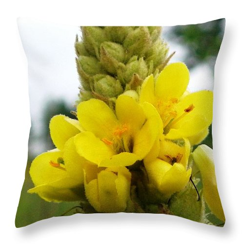 Nature Throw Pillow featuring the photograph Mellow Yellow by Peggy King