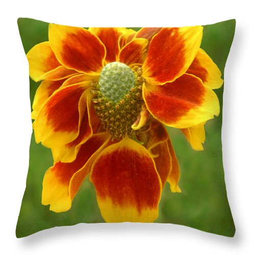 Nature Throw Pillow featuring the photograph Mexican Hat Dance Finale by Lucyna A M Green
